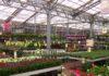 plantorama - billige planter og blomster